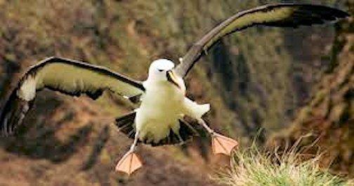 Image result for GOONEY BIRD PHOTO